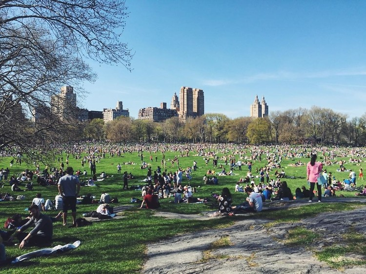 The Ultimate Central Park Drinking Game