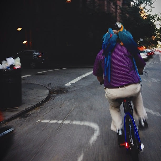 Citi Bike Miami >> NYC Citi Bike: Should New Yorkers Be Trusted With The Keys
