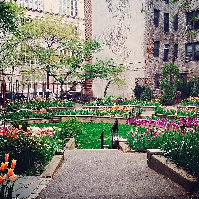 Good West Side Community Garden