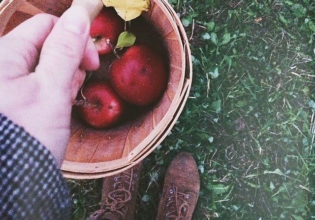 Apple Picking Near NYC