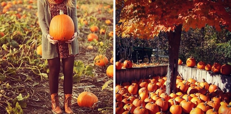 Autumn Day Trips: Our Favorite Pumpkin Picking Spots Near NYC