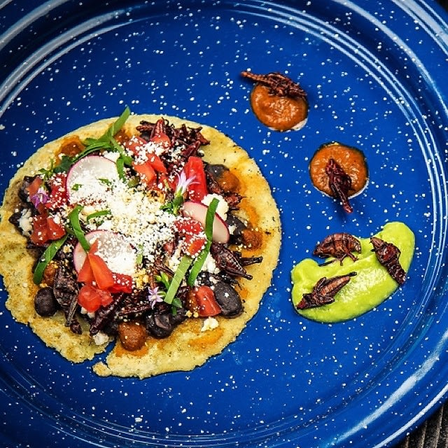 the black ant