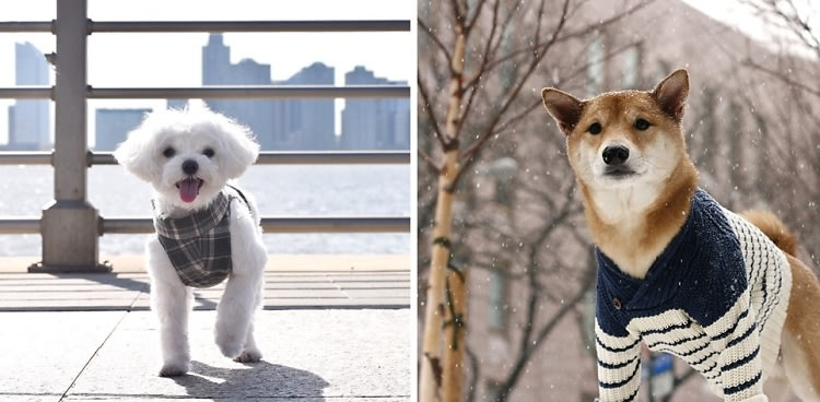 10 Of The Most Stylish Dogs On Instagram