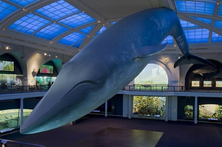 An Adult Only Slumber Party At The American Museum Of
