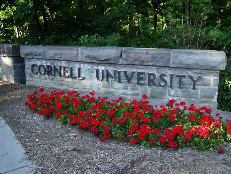Cornell University Colors