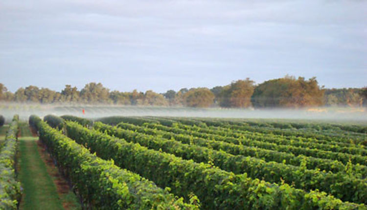 Best Wineries Long Island North Fork