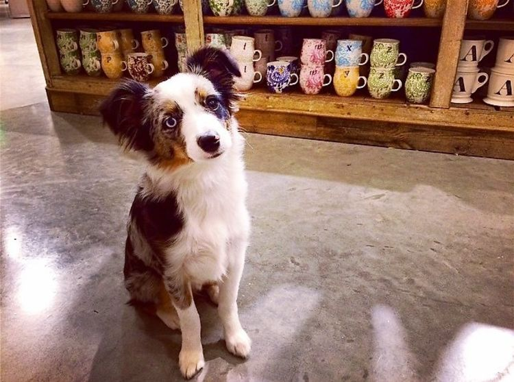 Dog Friendly Stores In Los Angeles