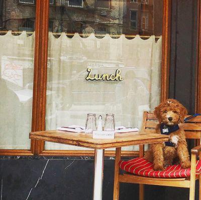 New York's Fanciest Al Fresco Pups