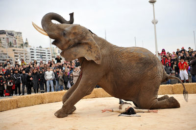 Monte Carlo Elephant