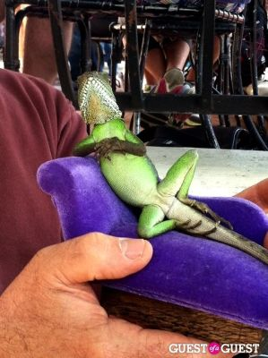 New Low: Smug Dragons On Mini Dragon-Sized Sofas At Urth Caffe Sunday Brunch