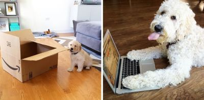 Navigate Amazon Prime Day With The Help Of These Cute Dogs
