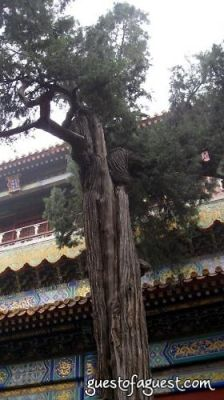 Forbidden City 8-15-08