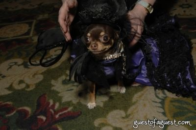 coco chanelentering in SKYBARK Pre Westminster Red Carpet