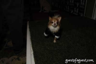 peanut ervin in SKYBARK Pre Westminster Red Carpet