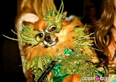 sophia loren-pomeranian in The Amanda Foundation's Bow Wow Beverly Hills