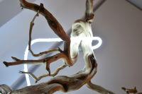 Voltz Clarke Gallery's Exhibition Garlands Of Skulls featuring Art Work By Christina Burch #66