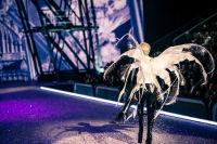 Victoria's Secret Fashion Show Paris 2016: Full Runway and Performances #251