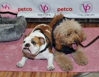 Vanderpump Pets launch event #7
