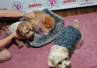 Vanderpump Pets launch event #22