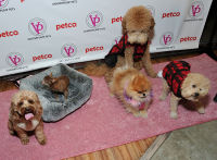 Vanderpump Pets launch event #26
