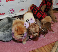 Vanderpump Pets launch event #31