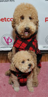 Vanderpump Pets launch event #61