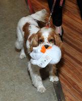 Vanderpump Pets launch event #85