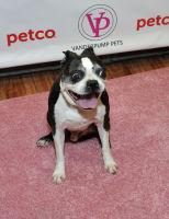 Vanderpump Pets launch event #89