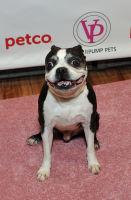 Vanderpump Pets launch event #90