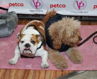 Vanderpump Pets launch event #103