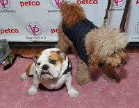Vanderpump Pets launch event #104