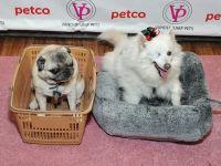 Vanderpump Pets launch event #126