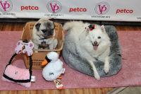 Vanderpump Pets launch event #128
