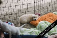 Puppies & Parties Presents Malibu Beach Puppy Party #10