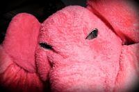 Pink Elephant 6 June 09 #126