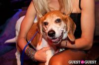 Beth Ostrosky Stern and Pacha NYC's 5th Anniversary Celebration To Support North Shore Animal League America #97