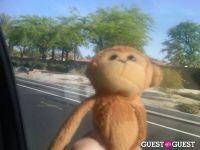 Baby Monkey goes to Indio #12