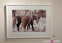 Slovenia in US Lipizzaner horses by Alenka Slavinec #1
