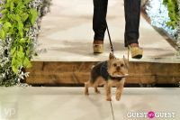 Fashion For Paws 2012 II #76