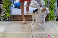 Fashion For Paws 2012 II #112
