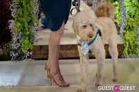 Fashion For Paws 2012 II #116