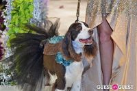 Fashion For Paws 2012 II #128