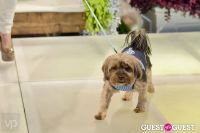 Fashion For Paws 2012 II #167