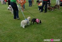 Paws Across The Hamptons Dog Walk To Benefit Southampton Hospital & Animal Shelter Foundation #147