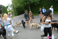 Paws Across The Hamptons Dog Walk To Benefit Southampton Hospital & Animal Shelter Foundation #225