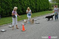 Paws Across The Hamptons Dog Walk To Benefit Southampton Hospital & Animal Shelter Foundation #230