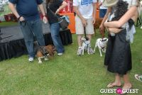 Paws Across The Hamptons Dog Walk To Benefit Southampton Hospital & Animal Shelter Foundation #296