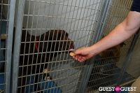 Jean Shafiroff and Dog Trainer Bill Grimmer Visit Southampton Animal Shelter #216