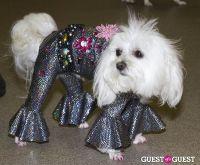 Pebble Iscious and Z Zee's Disco Birthday Bash  #50