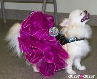 Pebble Iscious and Z Zee's Disco Birthday Bash  #51
